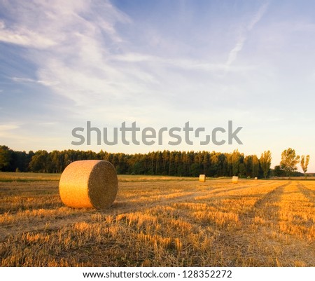 Bales of straw at sunset. summer landscape.