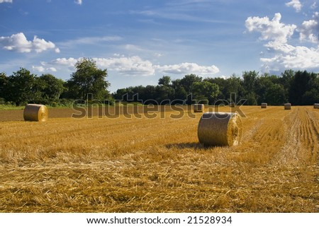 Bales on a field after summer - stock photo