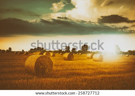 Bales on the field - stock photo