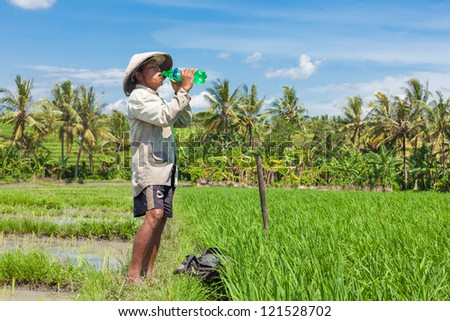 BALI - FEBRUARY 15. Farmer hydrating while working on paddy field on February 15, 2012 in Bali, Indonesia. Rice is the source of livelihood for about 100 million people in Indonesia.