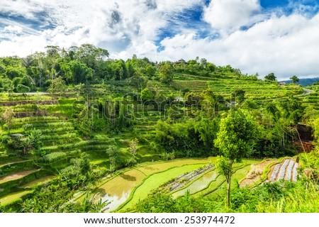 Bali island. Indonesia  - stock photo