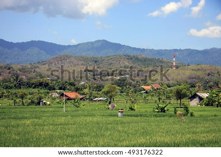 Bali Rice Fields in Bali, Indonesia - view across from a road towards hillside/mountain with radio mast and tin shacks in rice fields