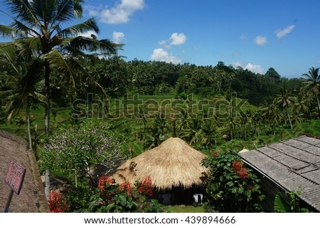 Bali Rice Terrace nearby small hub with thatched roof