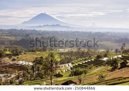 Bali Rice Terraces.  Rice fields of Jatiluwih  - stock photo