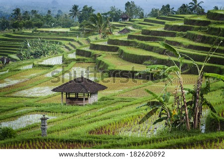 Bali Rice Terraces. The beautiful and dramatic rice fields of Jatiluwih in southeast Bali have been designated the prestigious UNESCO world heritage site. A truly inspirational landscape. - stock photo