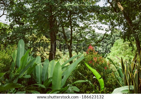balinese jungle - stock photo
