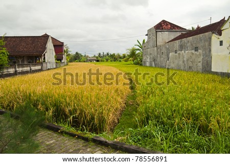 Balinese village with rice fields