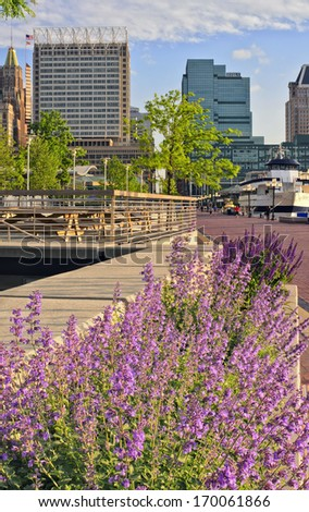 Balltimore's Inner Harbor Harbour framed by springtime flowers, including catmint Nepeta faassenii and other purple flowers, with Baltimore skyline, Baltimore, Maryland, USA - stock photo