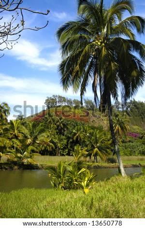 Balmy day in Kauai, Hawaii.  Palm tree, lazy river, blue sky and lush tropical green foliage. - stock photo