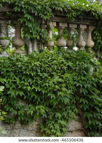 Balustrade with ivy. Background