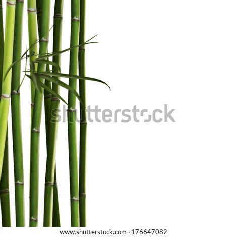 bamboo spa logo - photo #27