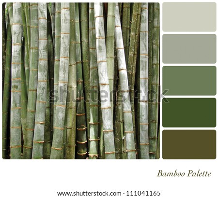 Bamboo background colour palette complimentary swatches for Oriental colour palette