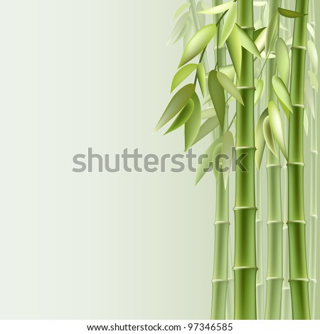 Bamboo background with copy space. - stock photo