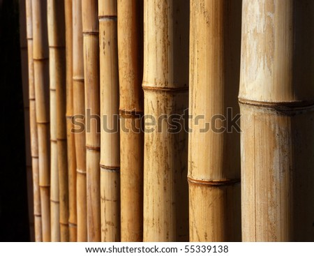 Bamboo Background, with selective depth of focus - stock photo