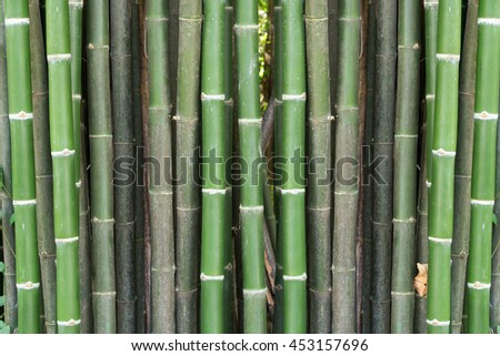 bamboo backgrounds in japanese