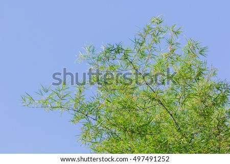 Bamboo branches on blue sky background.