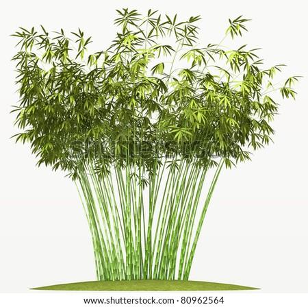 Bamboo bush or tangle isolated over white background - stock photo