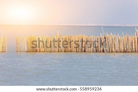 Bamboo fence and warm sunlight in the sea for protect the attack from heavy wave.