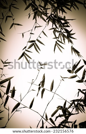 Bamboo forest backgroung in back and white tone - stock photo
