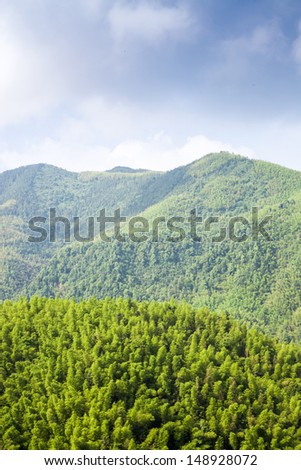 bamboo forest bird view of mountain