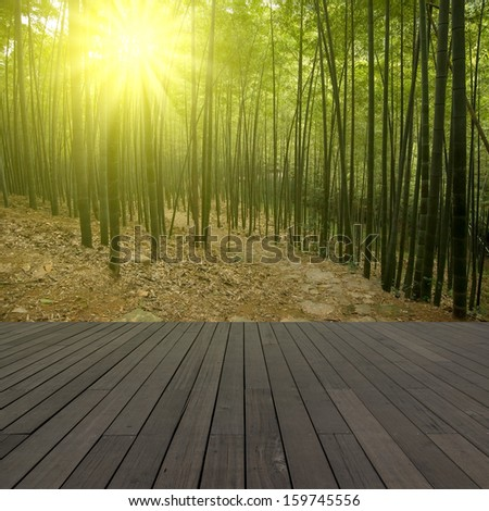 Bamboo forest floor - stock photo