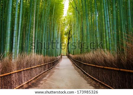 Bamboo Forest in Japan, Arashiyama, Kyoto - stock photo