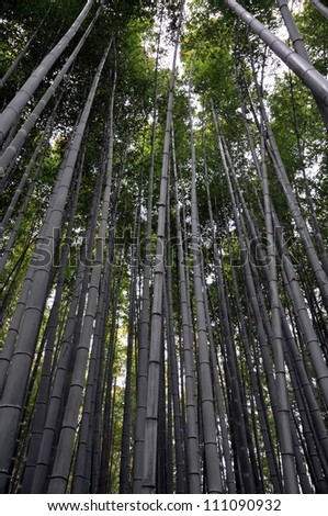 Bamboo forest in Kyoto, Japan. - stock photo