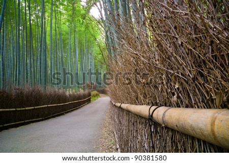 Bamboo forest in Kyoto, Japan - stock photo