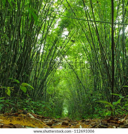 Bamboo forest. Jungle background in Thailand - stock photo