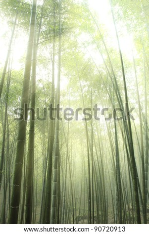 bamboo forest silhouette with morning sunlight