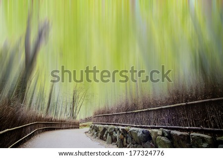 Bamboo forest with a road for adv or others purpose use - stock photo