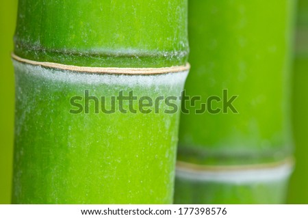 Bamboo green forest macro background - stock photo