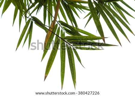 bamboo green leaves nature of frame on white isolated background. - stock photo