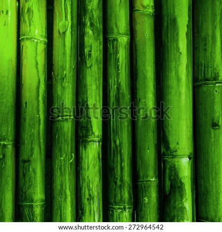 Bamboo. Green tropical nature background - stock photo