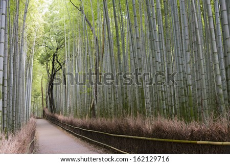 Bamboo Grove, Arashiyama, Kyoto, Japan. - stock photo