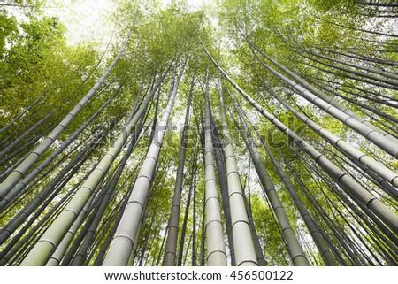 Bamboo grove, bamboo forest at Arashiyama, Kyoto, Japan   - stock photo
