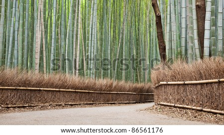 Bamboo grove in Arashiyama in Kyoto, Japan - stock photo