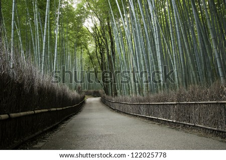 Bamboo grove in Arashiyama in Kyoto, Japan near the famous Tenryu-ji temple. Tenryuji is a Zen Buddhist temple which means temple of the heavenly dragon and is a World Cultural Heritage Site.