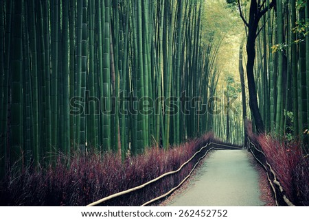 Bamboo Grove in Arashiyama, Kyoto, Japan. - stock photo