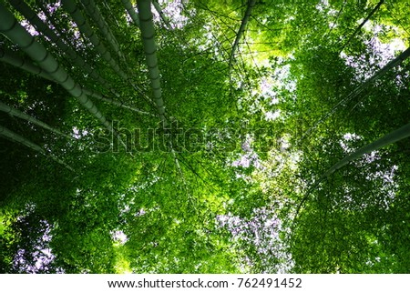 https://thumb9.shutterstock.com/display_pic_with_logo/167494286/762491452/stock-photo-bamboo-grove-in-japan-762491452.jpg
