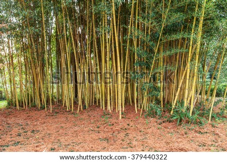 bamboo grove in the park in autumn day - stock photo