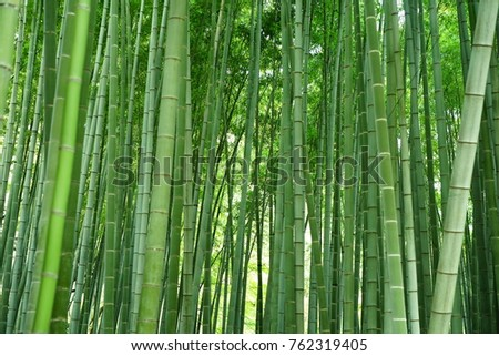 https://thumb9.shutterstock.com/display_pic_with_logo/167494286/762319405/stock-photo-bamboo-in-a-garden-762319405.jpg