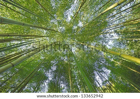 Bamboo in the big garden. - stock photo