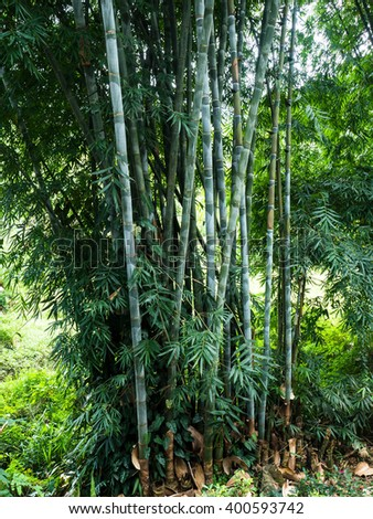 Bamboo in the jungle