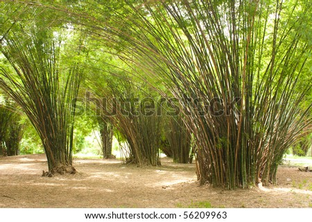 bamboo in the park, green grass in the park - stock photo