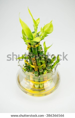 Bamboo inside a jar on the white background - stock photo