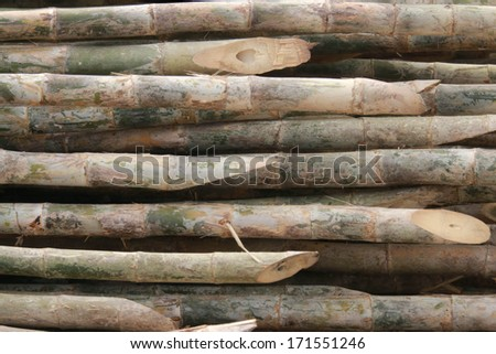 Bamboo is a grass family tree A tall, very Utilized by many. Leaves also become food for the pandas as well.