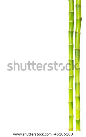 Bamboo isolated on a white background - stock photo