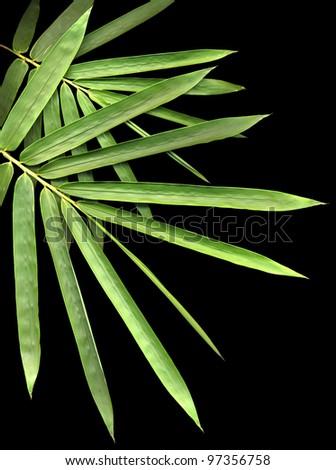 bamboo isolated on black background - stock photo