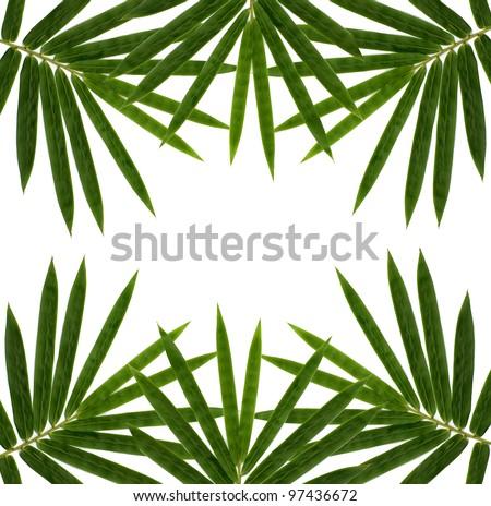 bamboo isolated on white background - stock photo